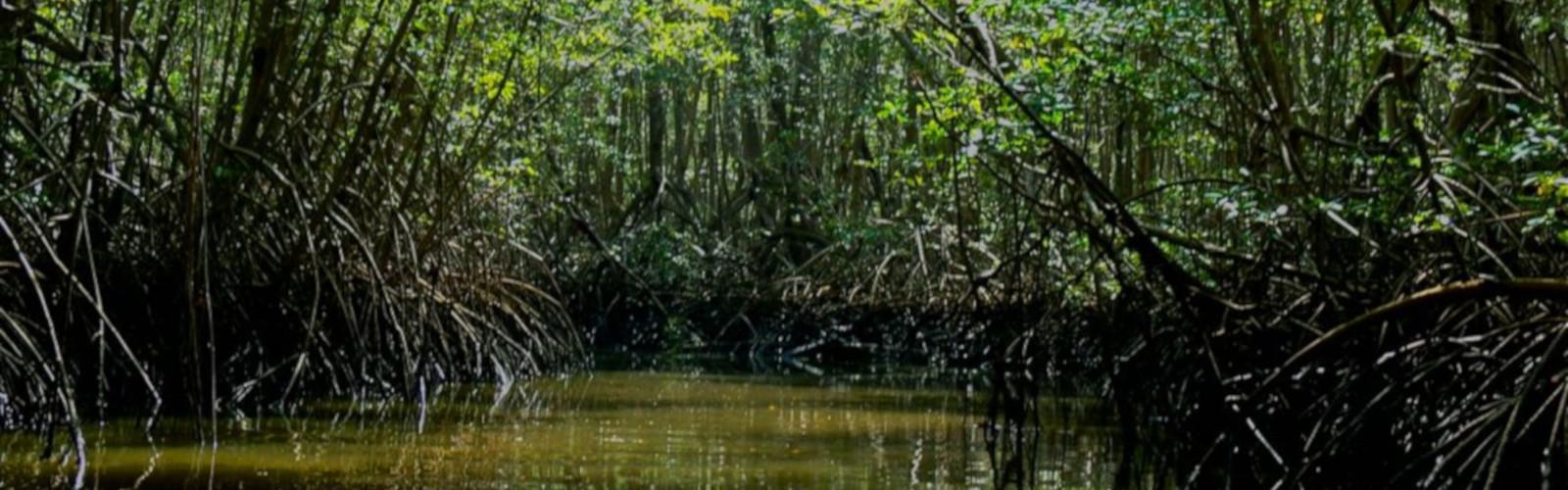 Tamarindo Mangrove Estuary Boat Tour - Native's Way Costa Rica - Tamarindo Transfers and Tours